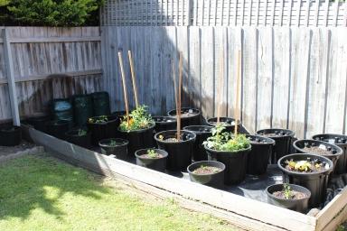 My Veggie Pots