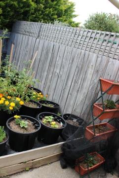 Veggie Garden- 06.01.2019
